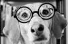 O discuție îndrăzneață cu dl. A. Zor, președintele M.I.T.Z.I., despre relațiile sexuale canino-umane