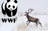 WWF România îi cere premierului să se implice în crearea unui plan de acțiune pentru pedepsirea și descurajarea braconajului