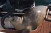 Viral. O focă s-a salvat în ultima secundă de un grup de balene ucigașe
