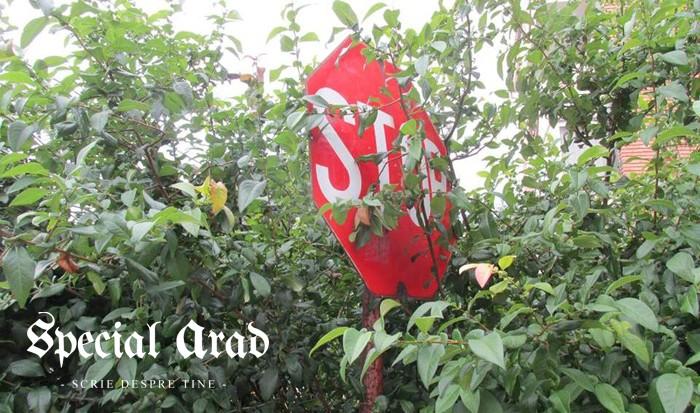 stop taierii copacilor
