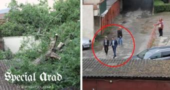"""Un copac imens a căzut și a spart geamurile unei case în centrul Aradului, iar Falcă s-a dus să vadă """"ce-i cu garajele astea"""". """"Răsare"""" o nouă parcare?"""