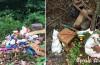 Pădurea Moneasa a devenit groapă de gunoi publică pentru niște indivizi certați cu natura