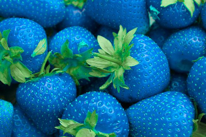 capsuni-albastre