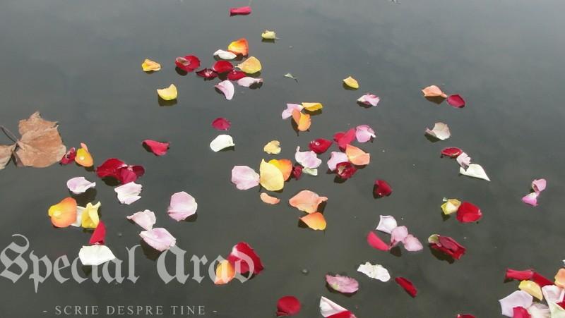 lacul padurice ca o apa cristalina (1)