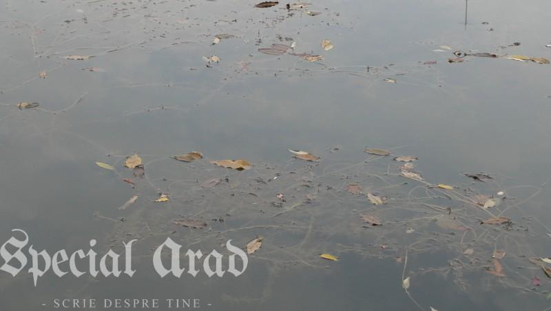 lacul padurice ca o apa cristalina (11)