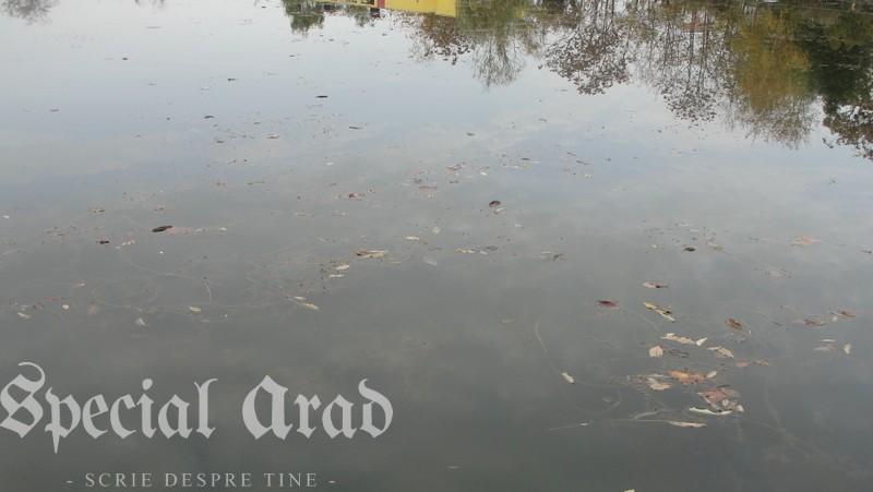 lacul padurice ca o apa cristalina (12)