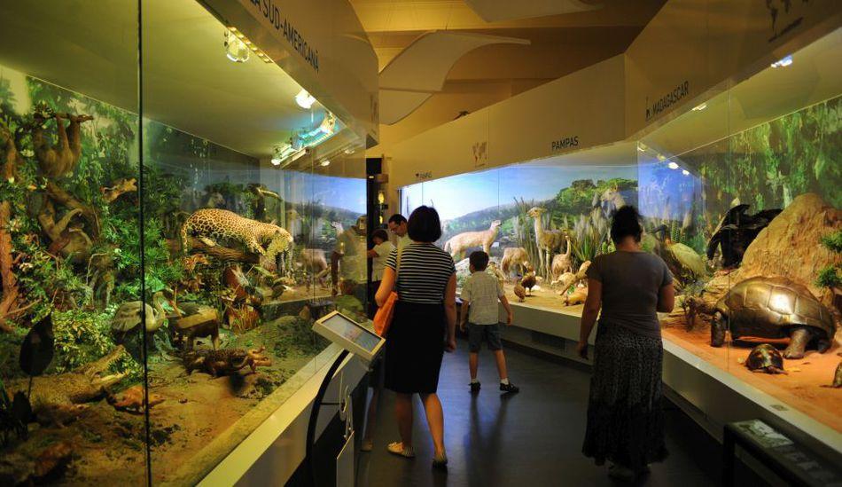 Redeschidere Muzeul Antipa