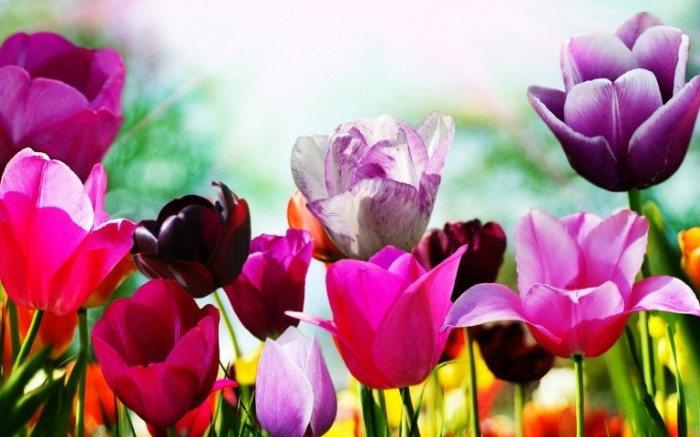 ob_29c579_3d-abstract-widewallpaper-tulips-in-spring-30012