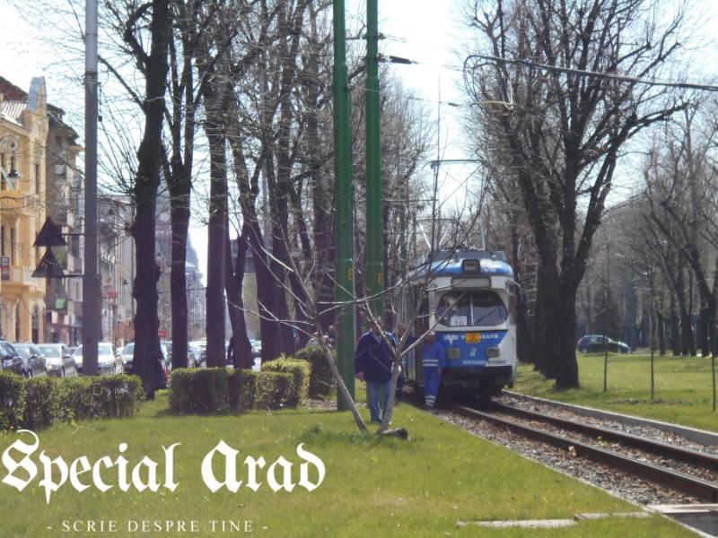 tramvai deraiat podgoria (11)