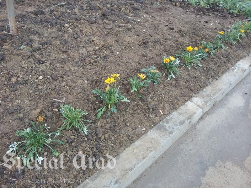 flori la podgo (2)