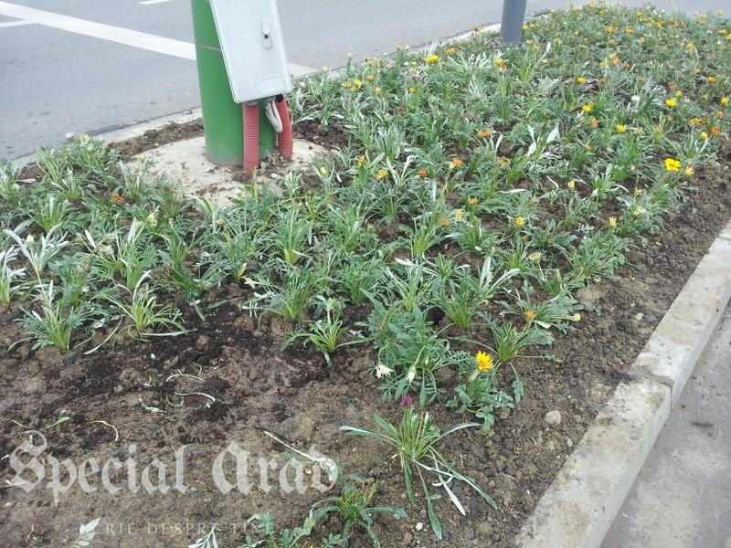 flori la podgo (3)