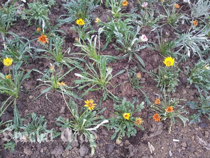 flori la podgo (4)