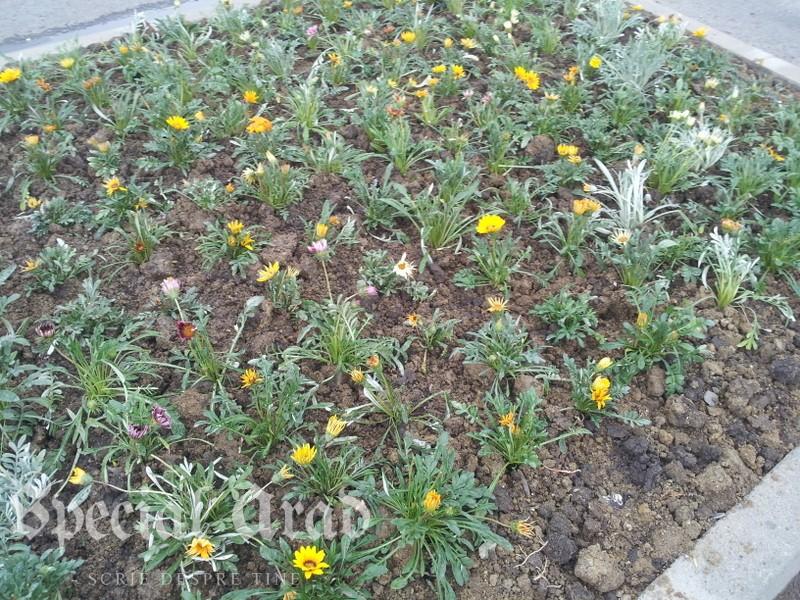 flori la podgo (5)