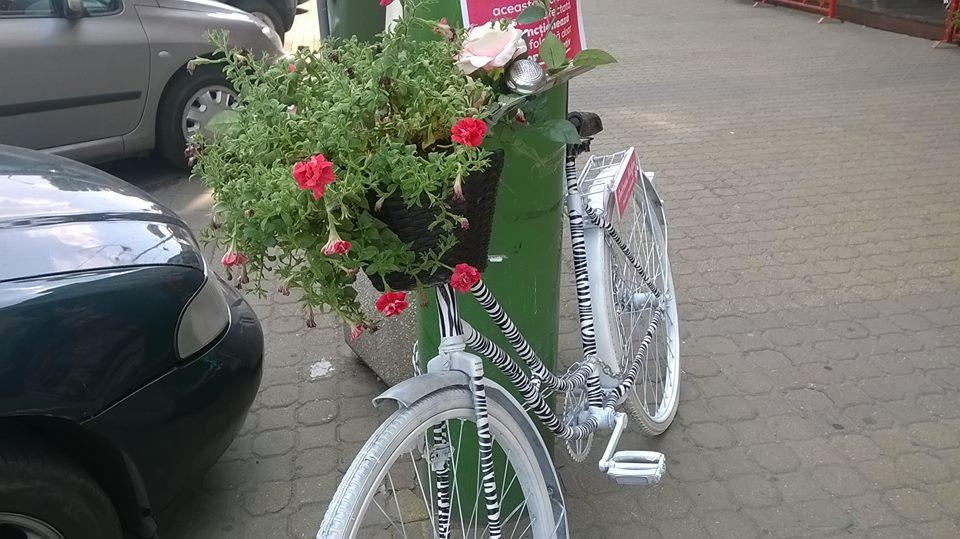 biciclete arad handsome (5)
