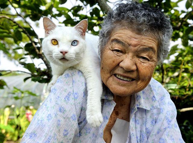 pisica-cu-cei-mai-ciudati-ochi