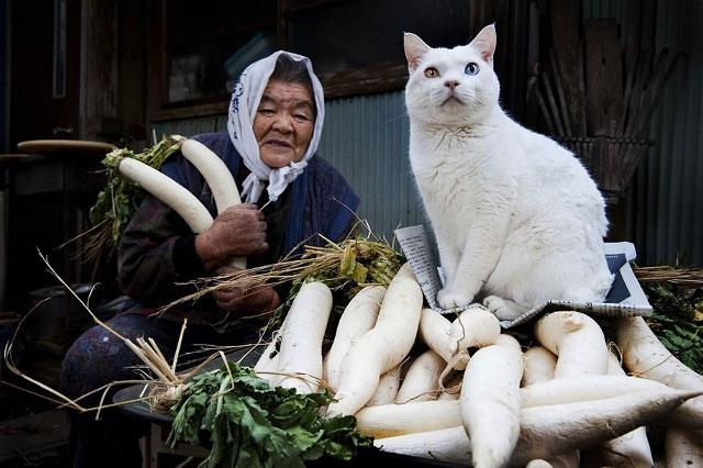 pisica-cu-cei-mai-ciudati-ochi11