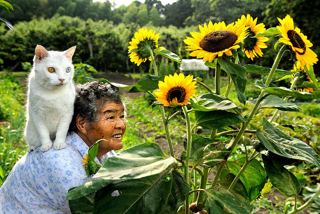 pisica-cu-cei-mai-ciudati-ochi16