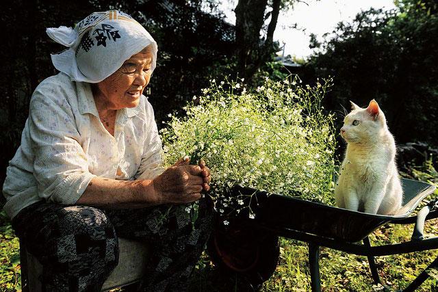 pisica-cu-cei-mai-ciudati-ochi7