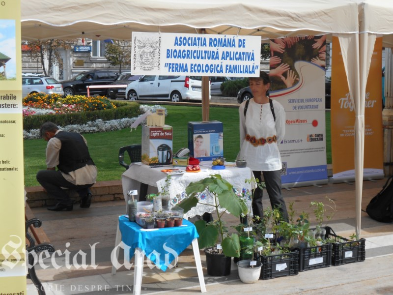 targ ONG Arad 2015 (11)