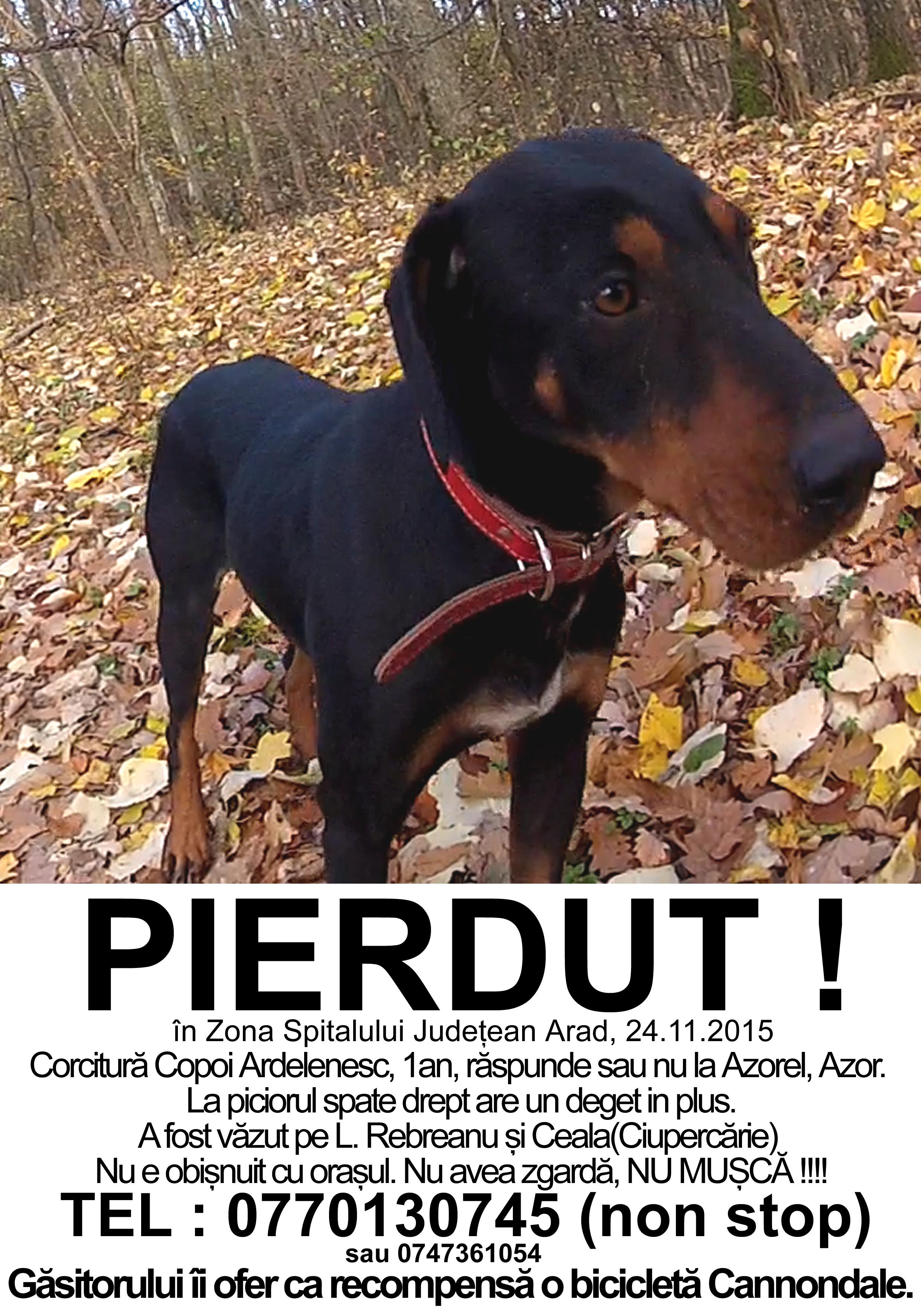 Pierdut-Corcitura-Copoi-ardelenesc-Arad-24.11.2015