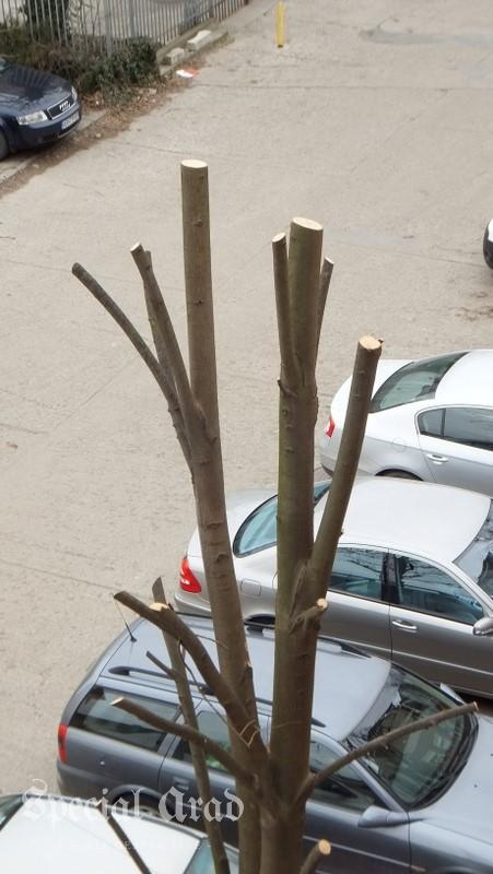 copaci ciuntiti (2)