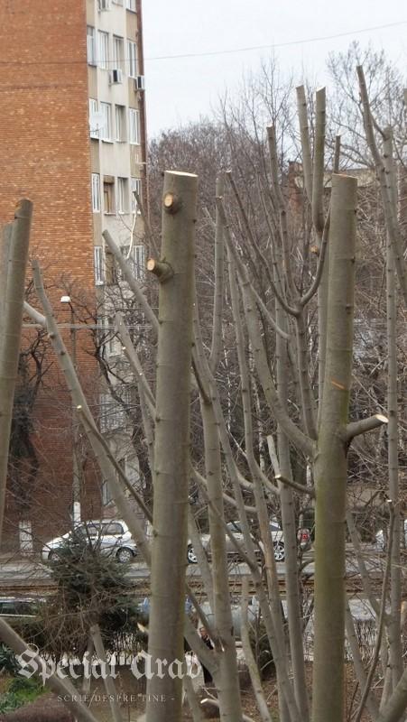 copaci ciuntiti (3)