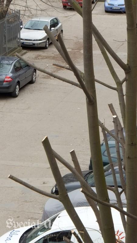 copaci ciuntiti (4)