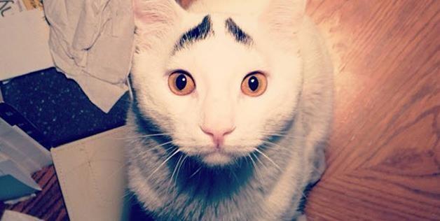 sam-pisica-cu-sprancene-noua-senzatie-de-pe-net-foto_3