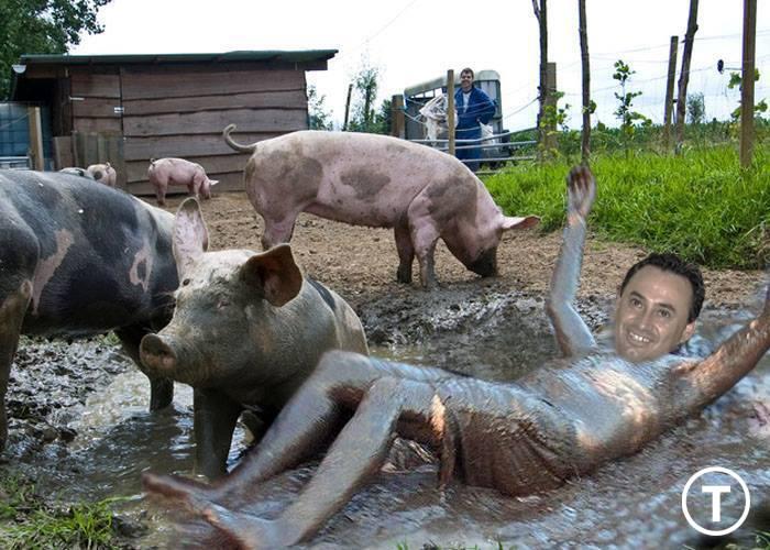 falca-porci1