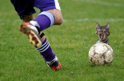 funny_cat_soccer_problem_crop_650x440