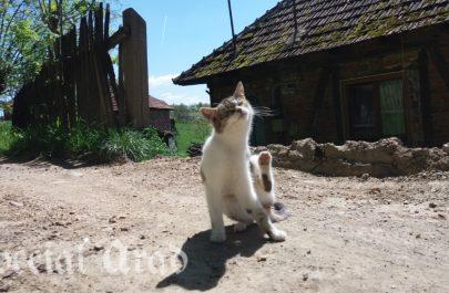vidra (13)