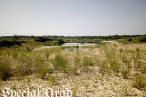 Dezastru ecologic în Arad (II) Bombă! Aradul va rămâne fără apă în următorii 30 de ani!