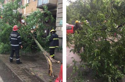 copaci cazuti - ISU Arad