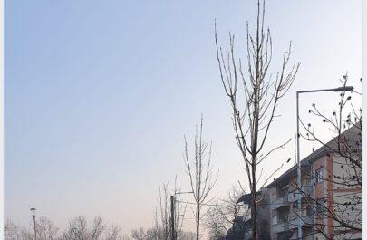 poze copaci 2